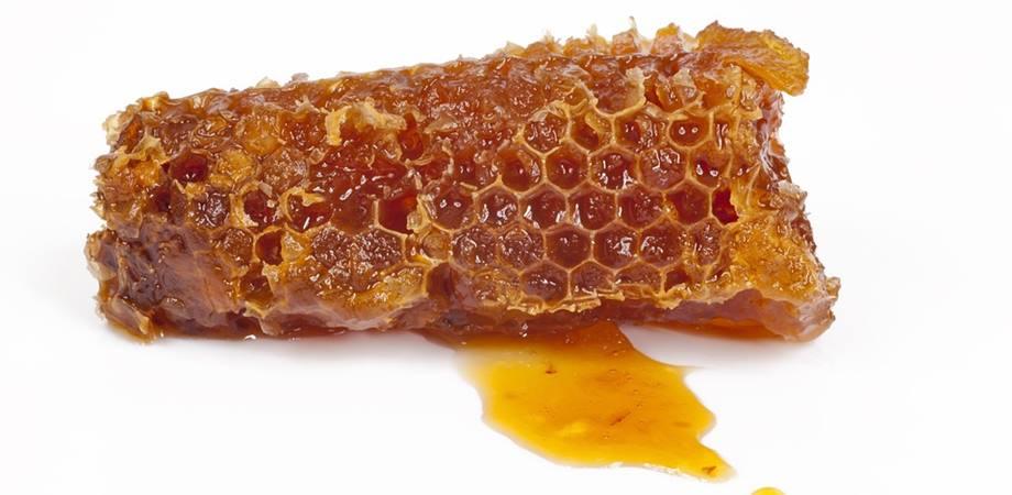 apiterapia ceara de albine