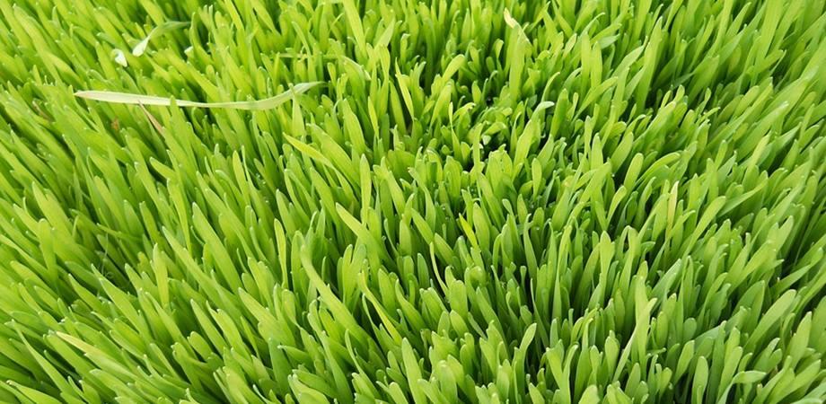 orz verde beneficii
