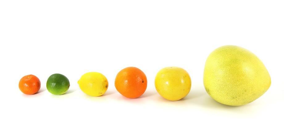 tipuri de citrice