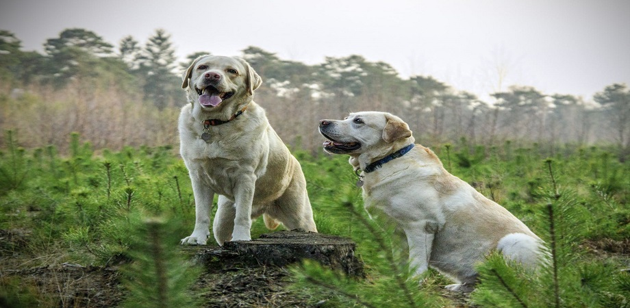 Ce boli pot fi transmise de animalele de companie?