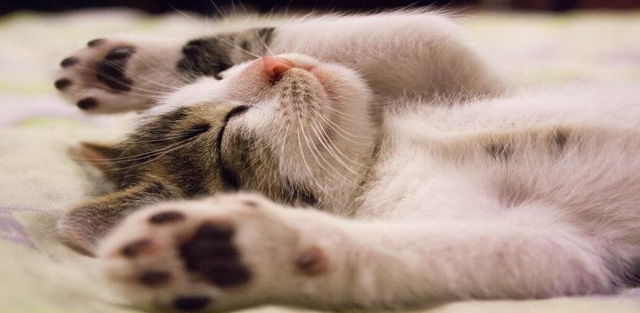 Ce este felinoterapia?