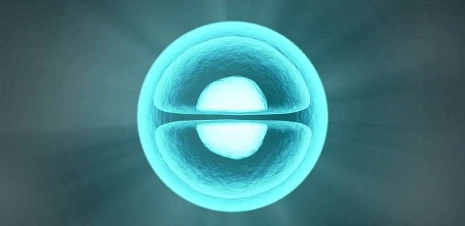 diviziunea celulara Ereditatea si genele