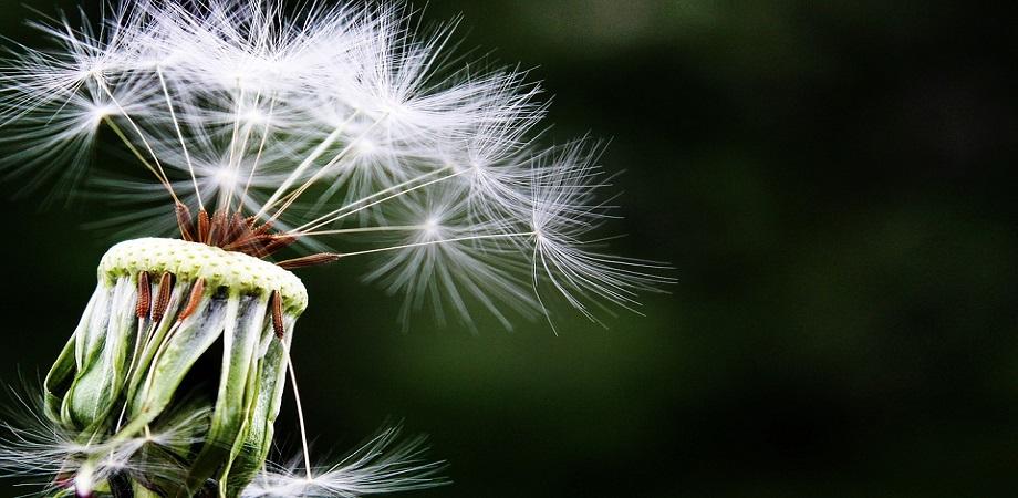 Sfaturi pentru controlul alergiilor