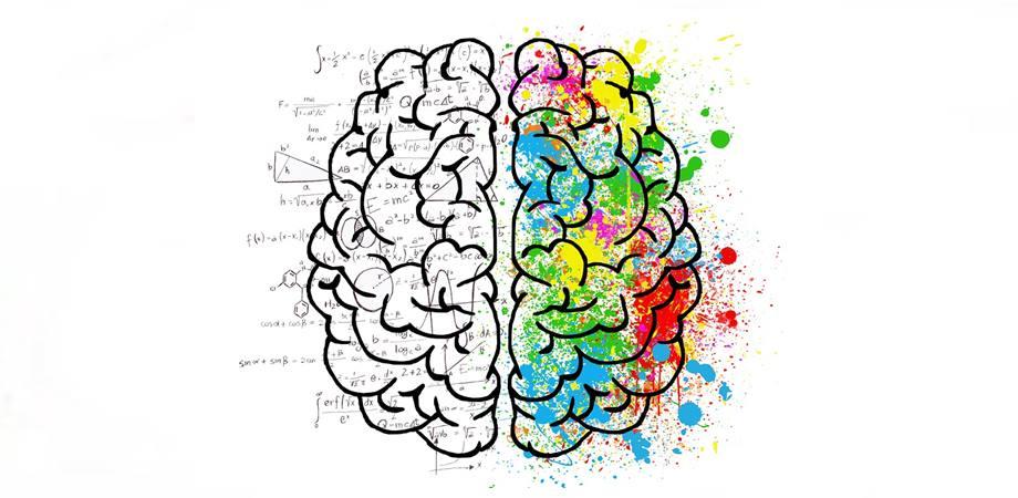 creier stang creier drept