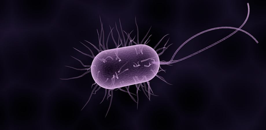 Infectia cu Clostridium difficile, Gastroenterologie