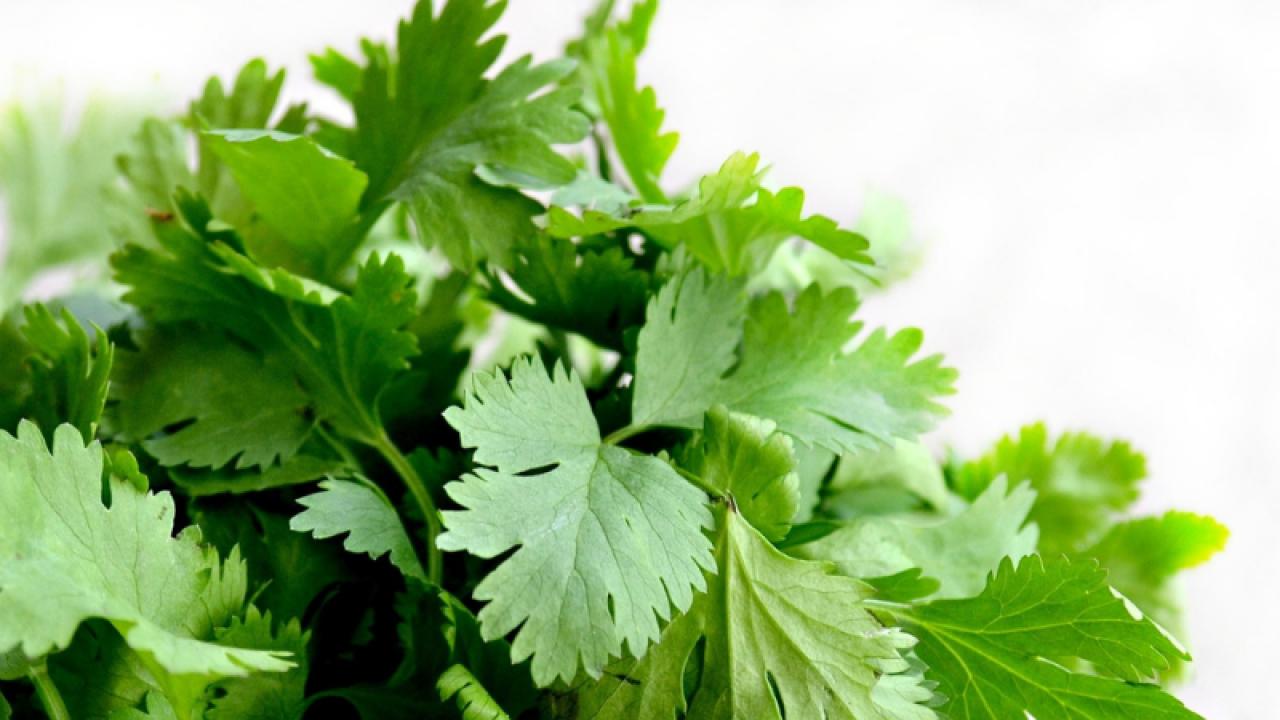pătrunjel și frunze de menta pentru pierderea în greutate