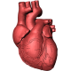 Aritmii cardiace