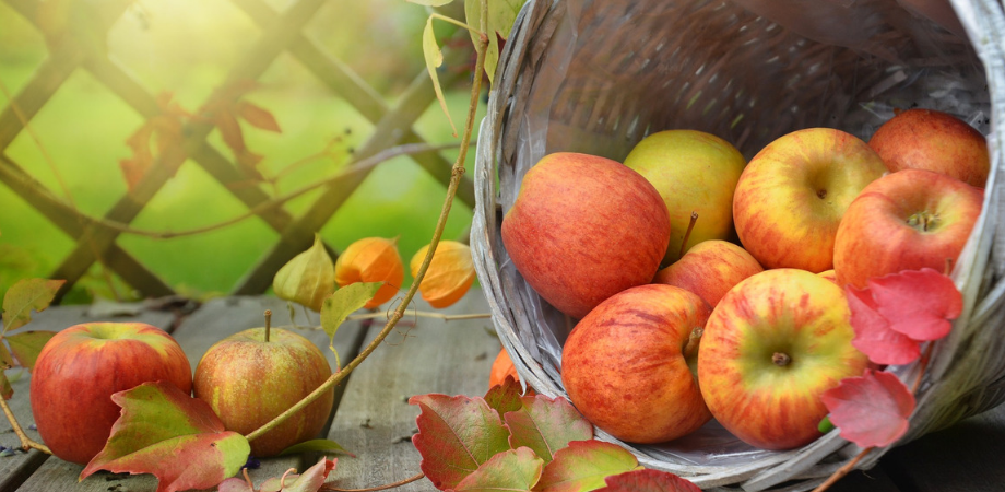 informatii generale despre mere