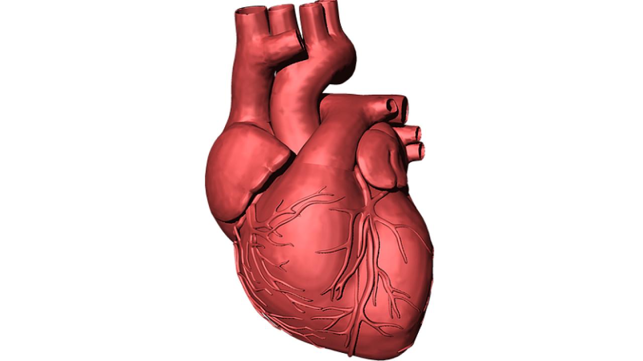 prolapsul valvei mitrale și dureri articulare