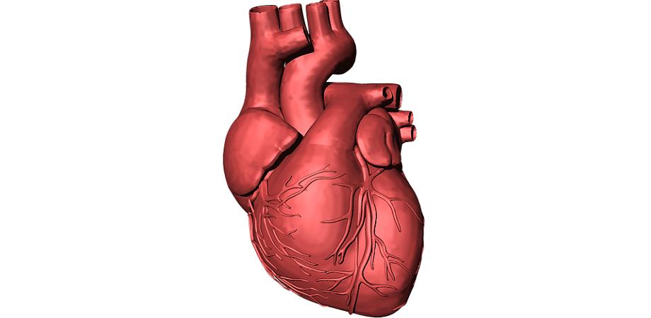 Bolile valvelor cardiace