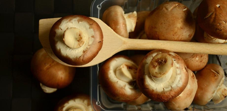 dieta cu ciuperci informatii generale