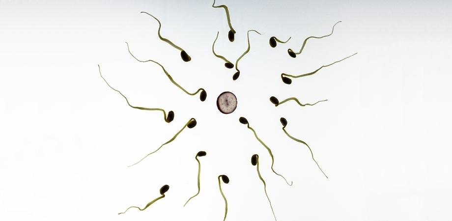 fertilitatea si sarcina