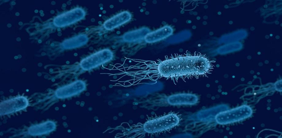 Cand este indicata antibiograma?