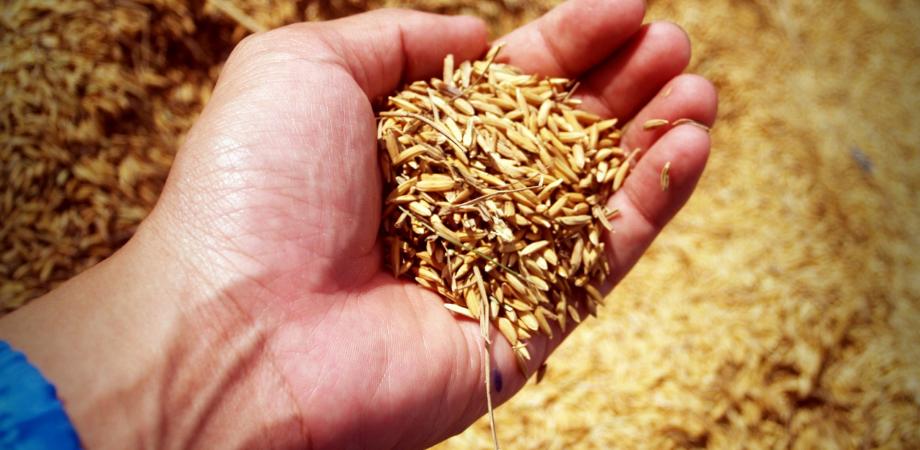 cereale integrale ce contin