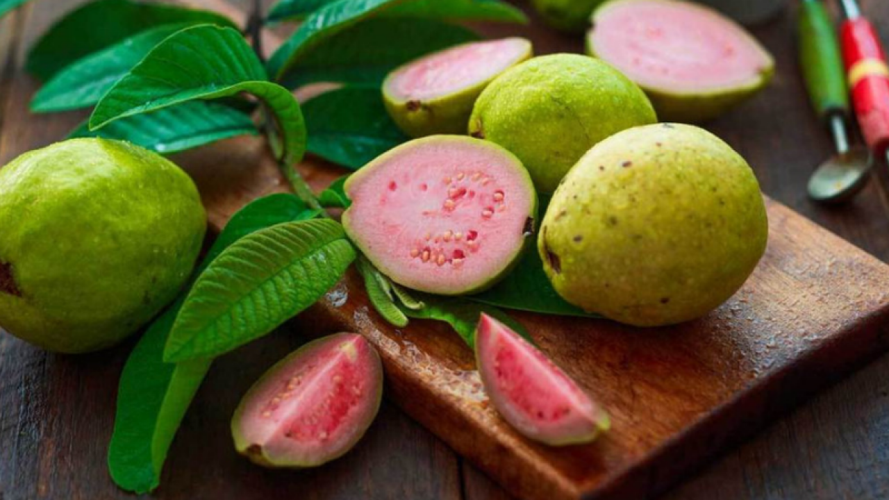 guava frunze pentru revederea pierderii în greutate