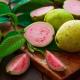 fructul guava