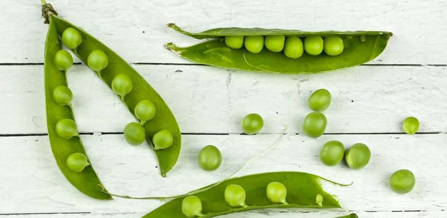 surse vegetale de proteine