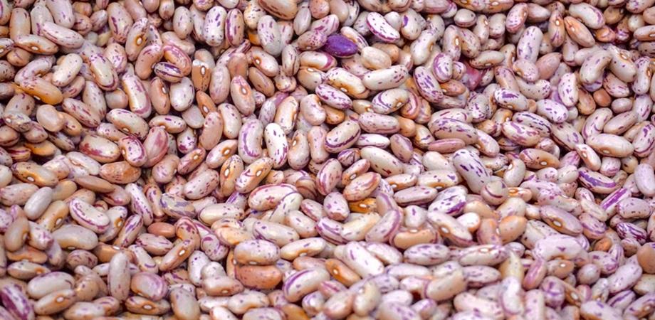 top surse de proteine vegetale