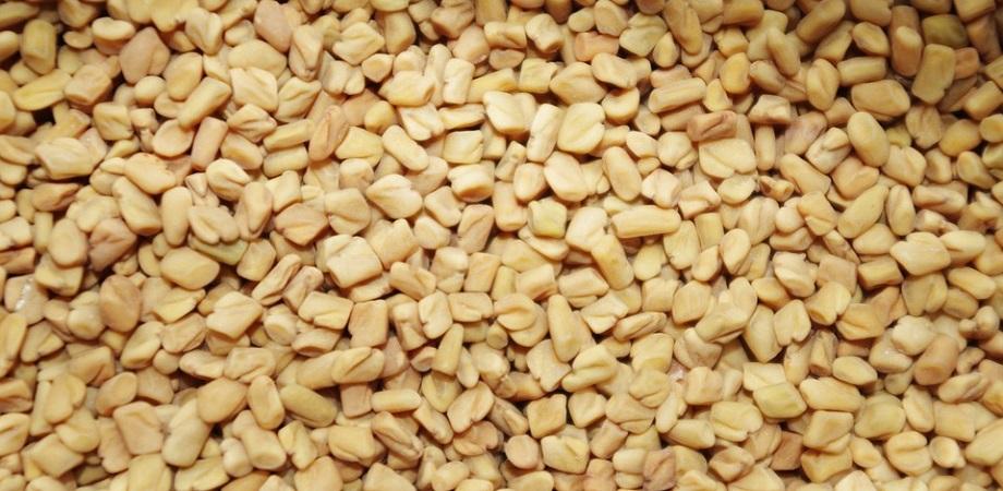germeni de semințe de schinduf