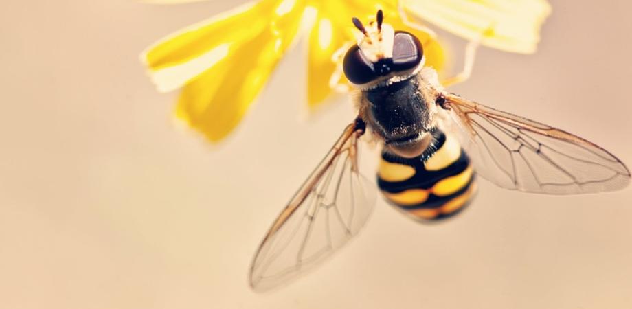 beneficiile polenului