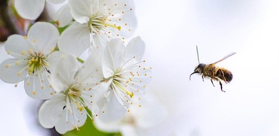 utilizarea polenului
