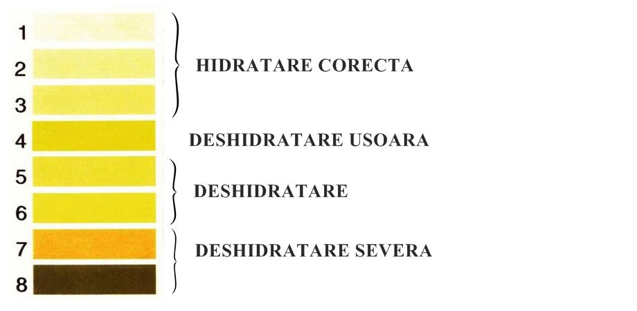 grafic deshidratare si culoarea urinei