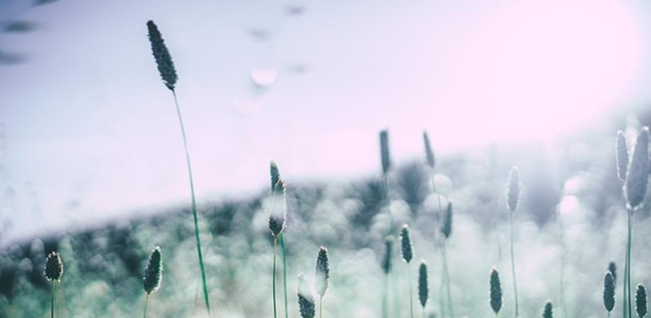 indicatiile testelor de alergii