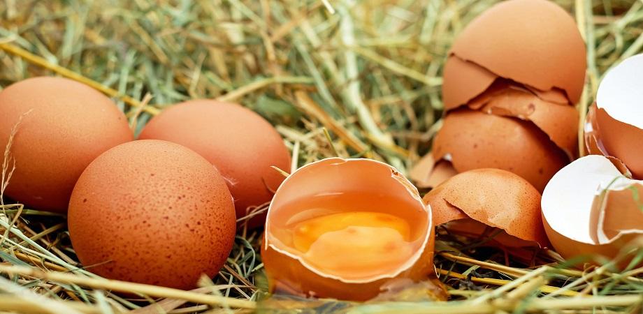 Sfaturi pentru persoanele alergice la ou