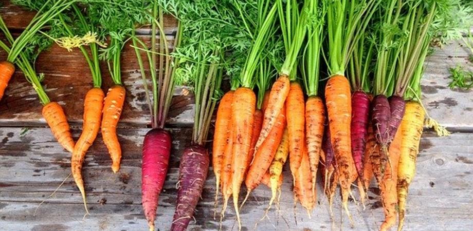 tipuri de morcovi