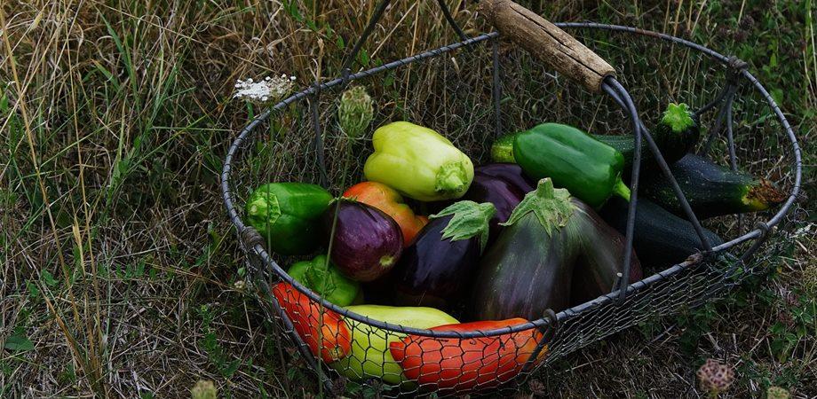legume solanancee