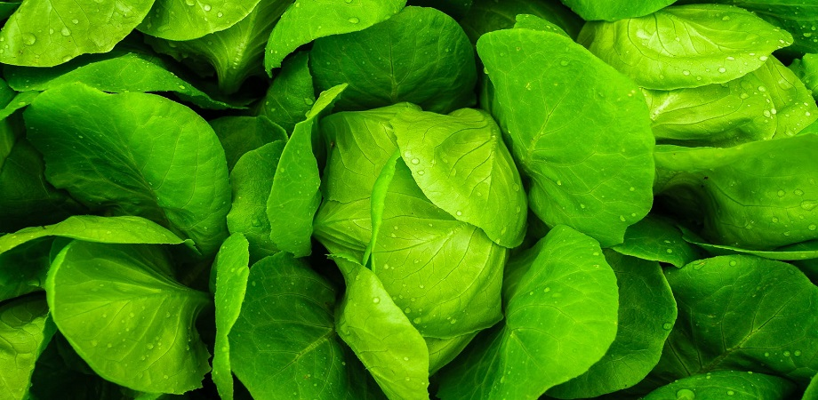 Ce contine salata verde?