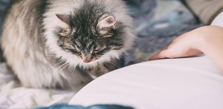 desensibilizare alergie pisici