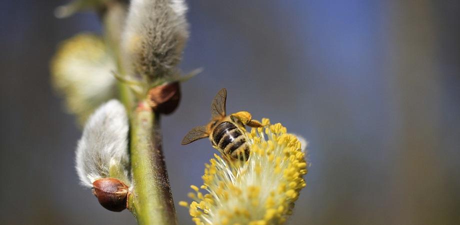 desensibilizarea alergica