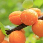 Caisele – beneficii, valori nutritionale, contraindicatii