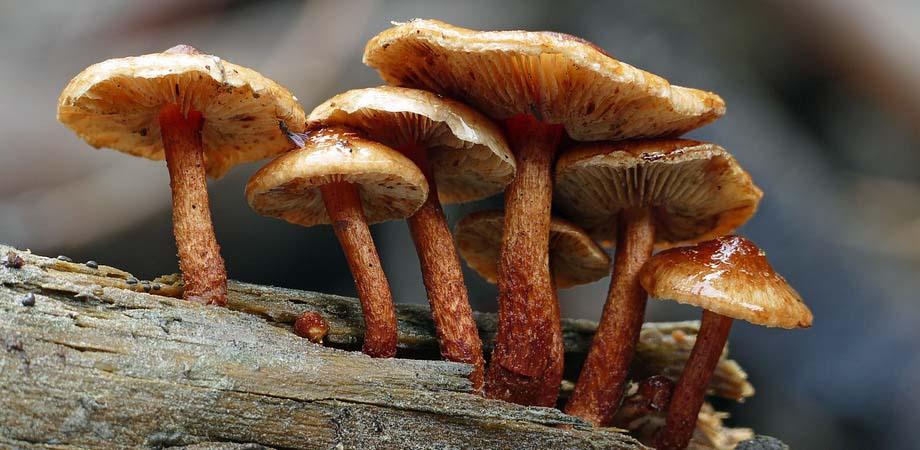Simptome intoxicatie cu ciuperci
