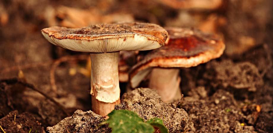 Cum se trateaza intoxicatia cu ciuperci?