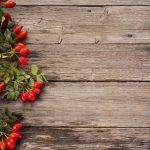 Macesele – beneficii, utilizari, contraindicatii