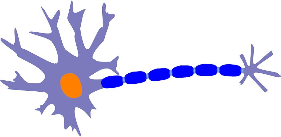 celula nervoasa