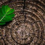 Viata sustenabila – 37 de idei pentru un stil de viata sustenabil
